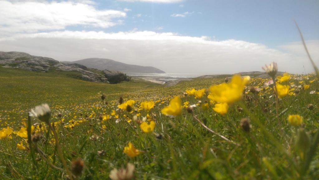 Typical Atlantic coast scenery.